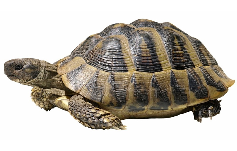 Why Speakers Should Embrace Their Inner Tortoise